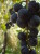 LTFP016: Seedtime & Harvest Principle